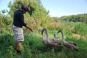 odvážný Láďa s labutěmi