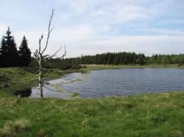 Volárenský rybník